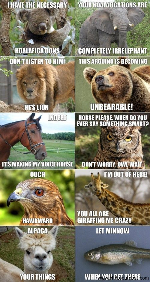 Pin By Roman Gasek On A Laughing Matter Funny Animal Jokes Animal Jokes Funny Animals