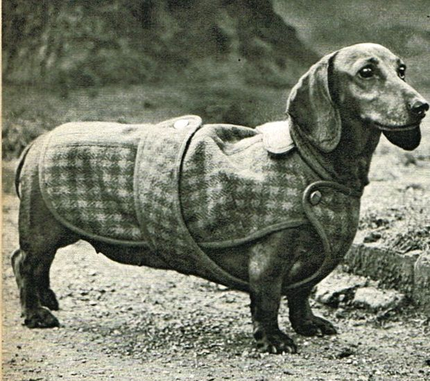 Vintage Dachshund Wiener Dog Coat Sewing Pattern Pdf Vintage