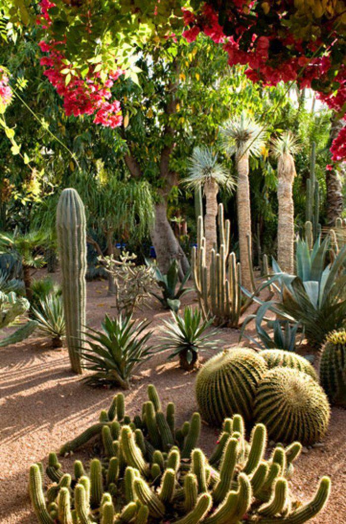 Majorelle Garden Easy landscaping, Desert landscaping