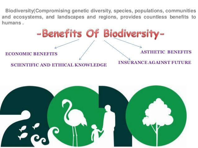 Assisted Suicide Essay Essay On Bio Diversity Importance Of Biodiversity To Humankinds Illustration And Example Essay also Essay On Persuasion Biodiversity Importance  Google Search  Ecology And The  Social Class Essays