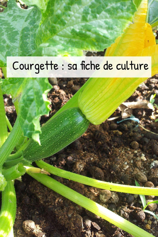 Épinglé sur Cultiver son potager