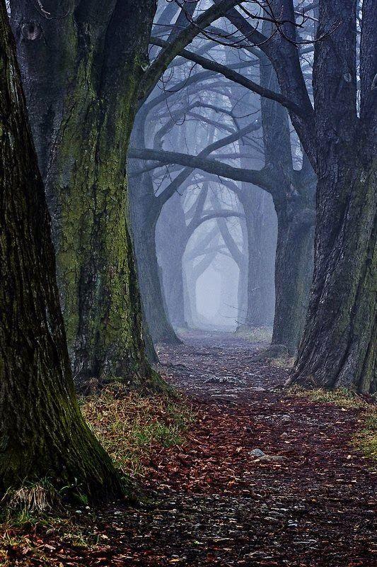 Foto de Amazing things in the world en Google+