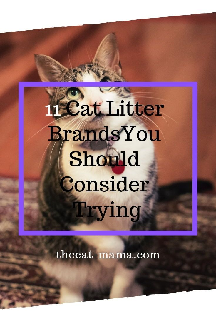 Creative ways to hide your Litter box in plain site