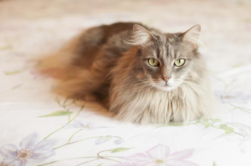 How To Remove Cat Pee From A Mattress Cat Pee Smell Cat