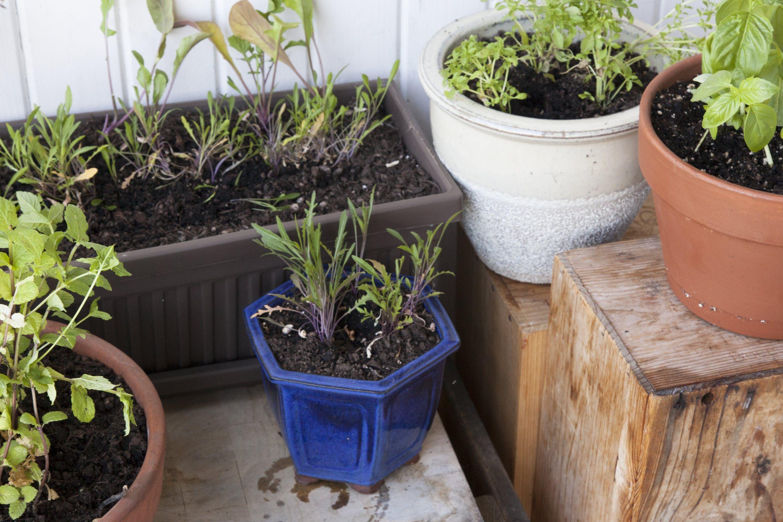 The Total Beginner S Guide To Successful Indoor Gardening Indoor