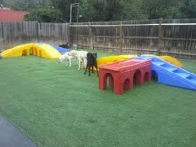 Puppywood Pet Resort Dog Boarding Cincinnates Ohio Dog