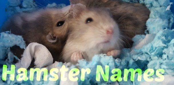 Pin By King Man On Coisas Para Usar Hamster Names Cute Hamster Names Cute Hamsters