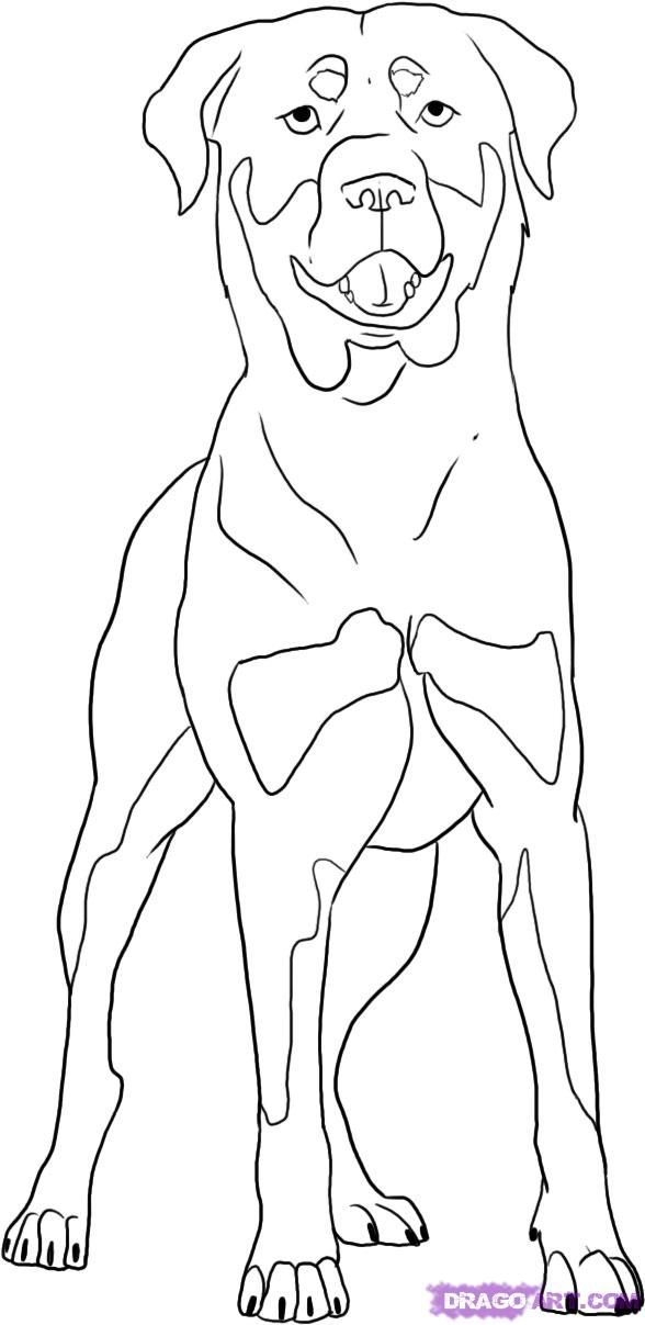 Free Printable Rottweiler Coloring Page Available For Download Simple And Detailed Versions For Adults Dog Coloring Page Coloring Pages Animal Coloring Books