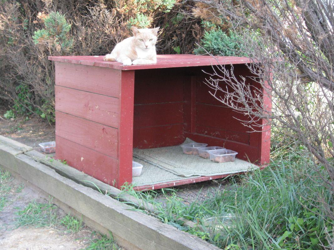 pure bred cat rescue wi