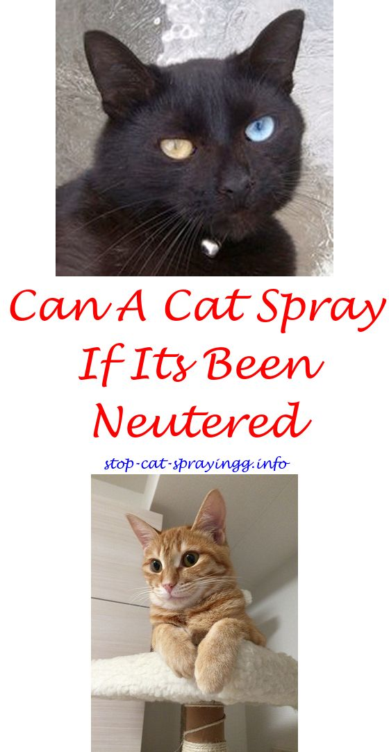 diy cat spray what do cats spray smell like - is cat spray white.cat ...