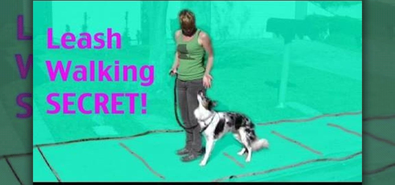 How To Teach Your Dog To Walk Next To You On A Loose Leash Dog