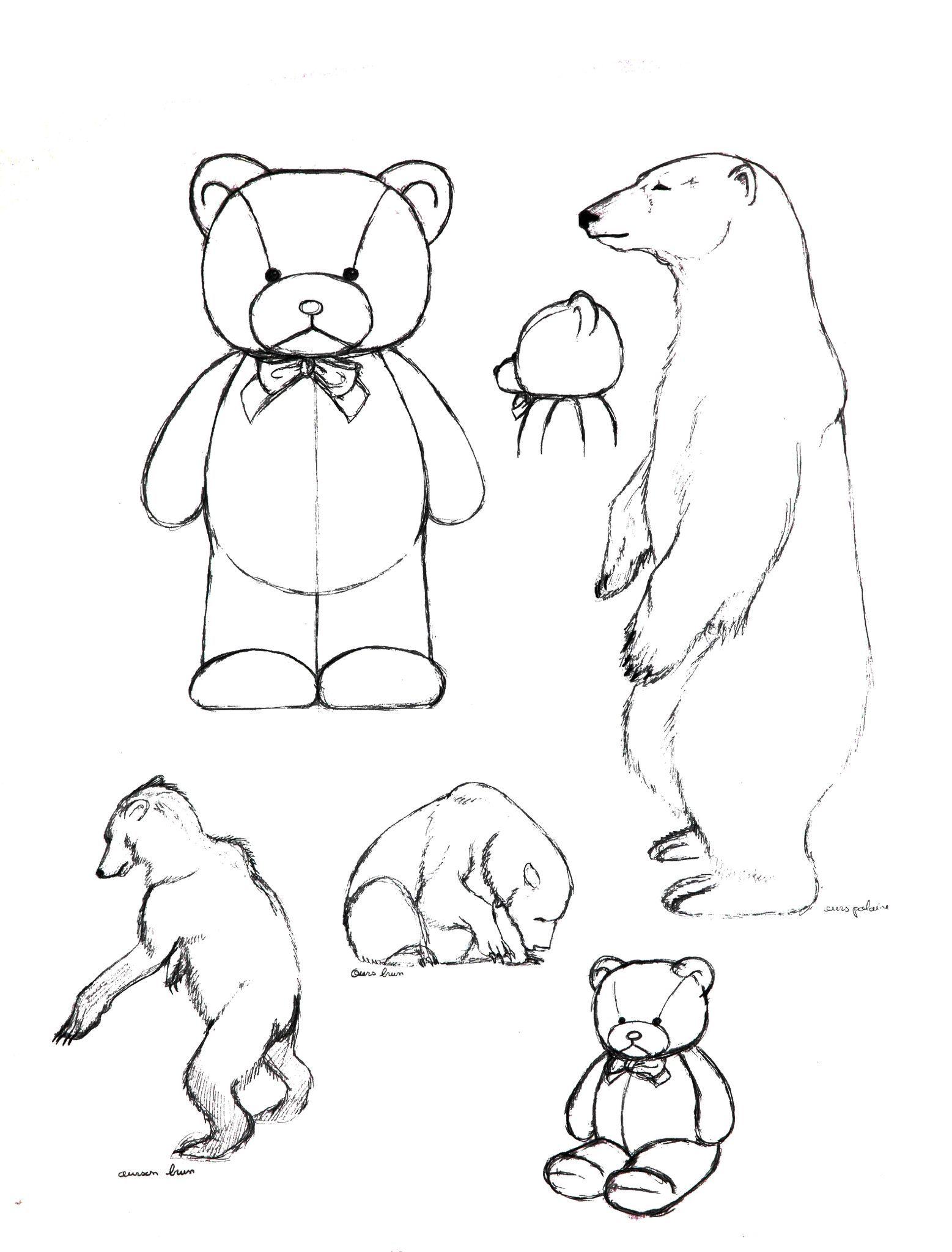 L 39 anatomie d 39 un ours en peluche blog de bandes - Dessin d un ours ...