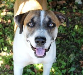 Ash Is An Adoptable Hound Dog In Parkersburg Wv I Sure Am A