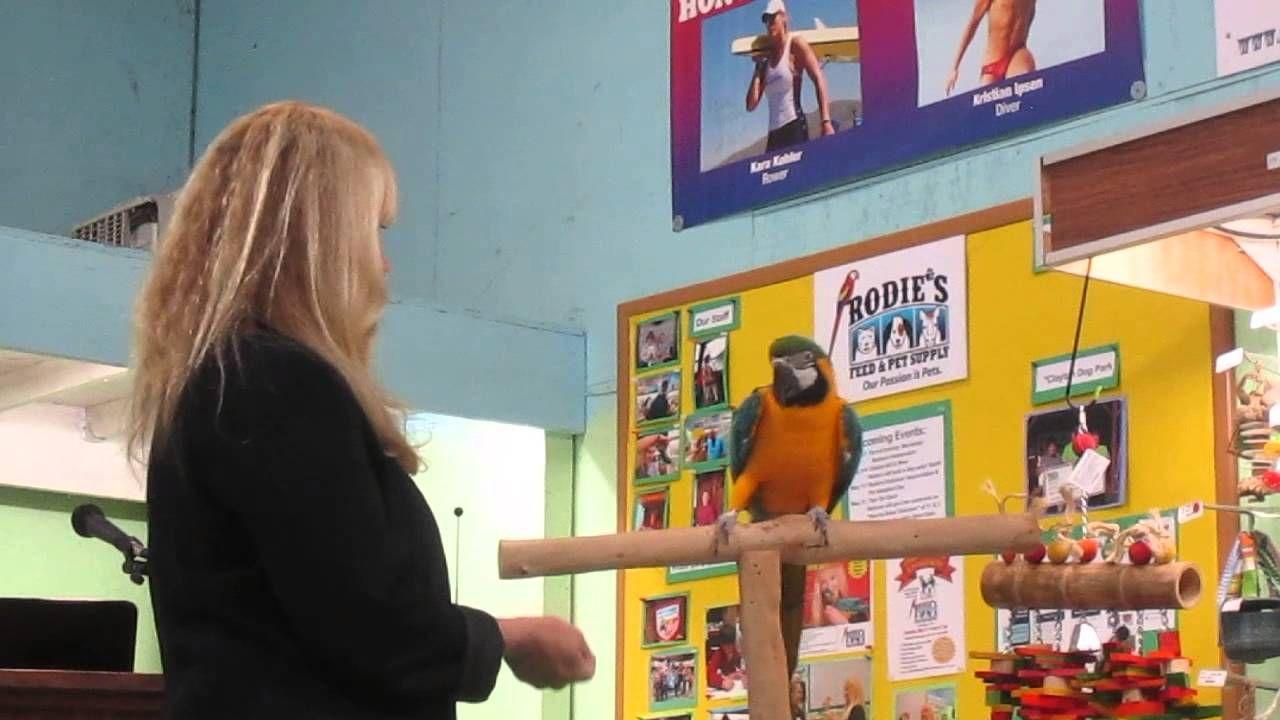 Part 2 - Target Training B&G Macaw with Barbara Heidenreich at Rodies Fe...