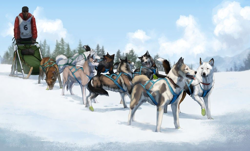 Pin By Mandy Carman Aussies On Iditarod Urban Mushing Sled