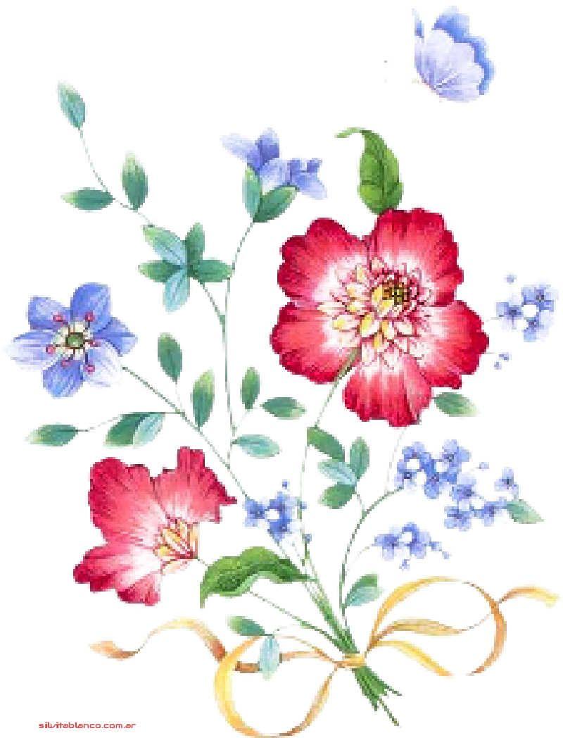 orquideas, rosas, flora lili, margaritas, claveles, adornos