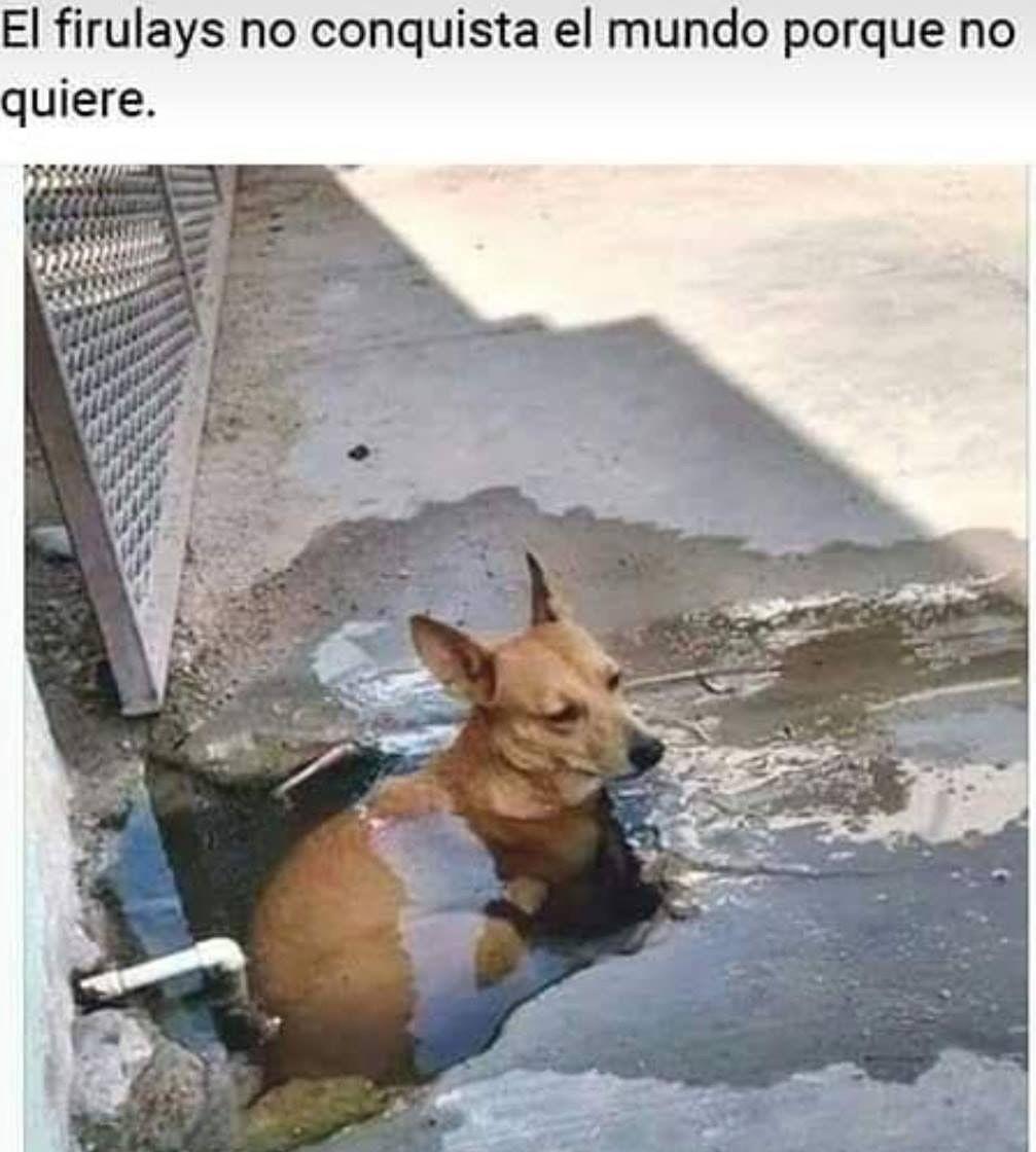 Pin De Denisse Tahis En Memes Memes Estupidos Memes De Animales Divertidos Meme Divertido