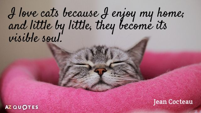 Quotes About Cats Quotationjeancocteauilovecatsbecauseienjoymyhomeand .