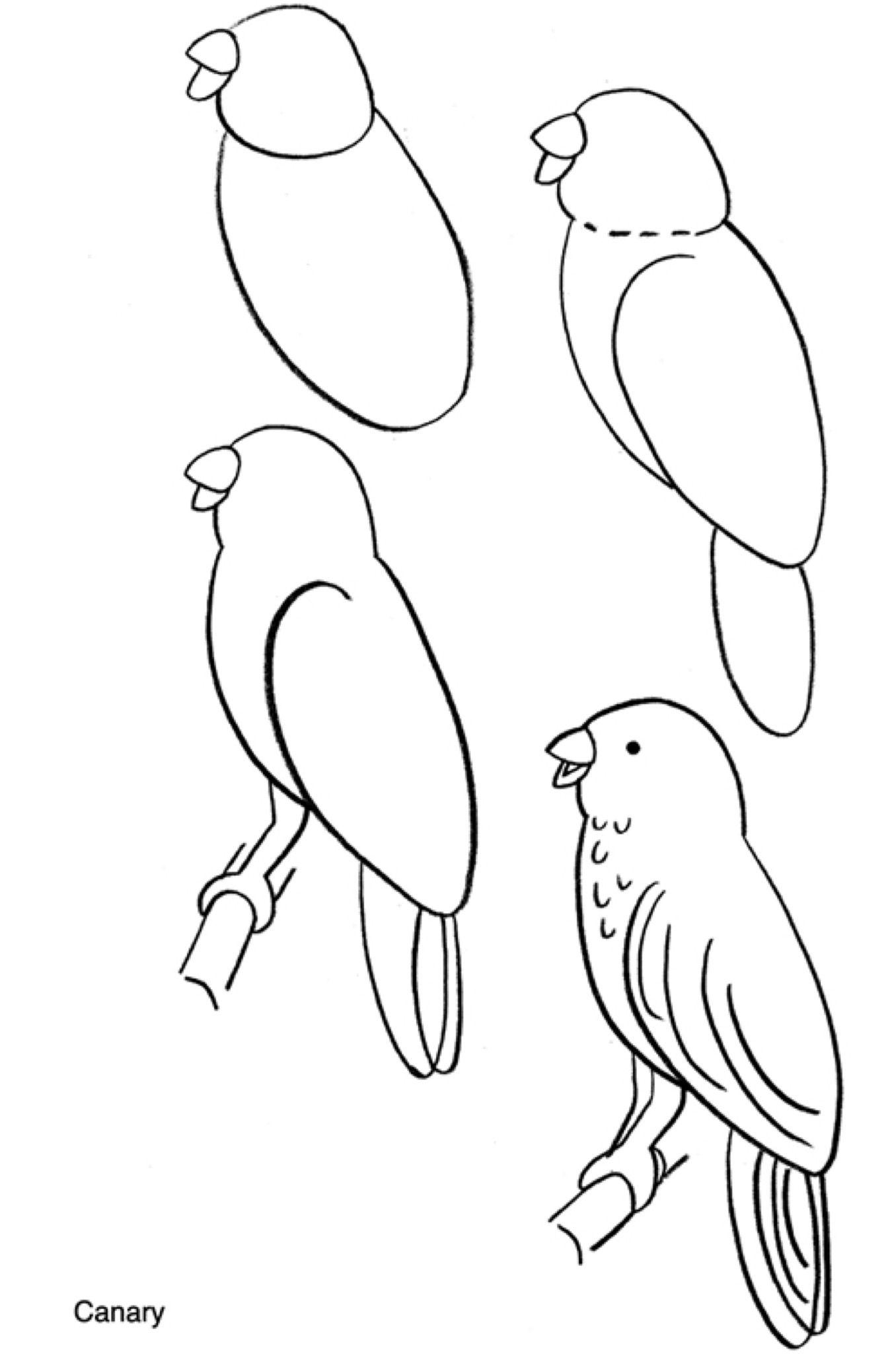 Pin Van April Ferland Op Mi Fai Un Disegno Vogels Tekenen Dieren Tekenen Leer Tekenen