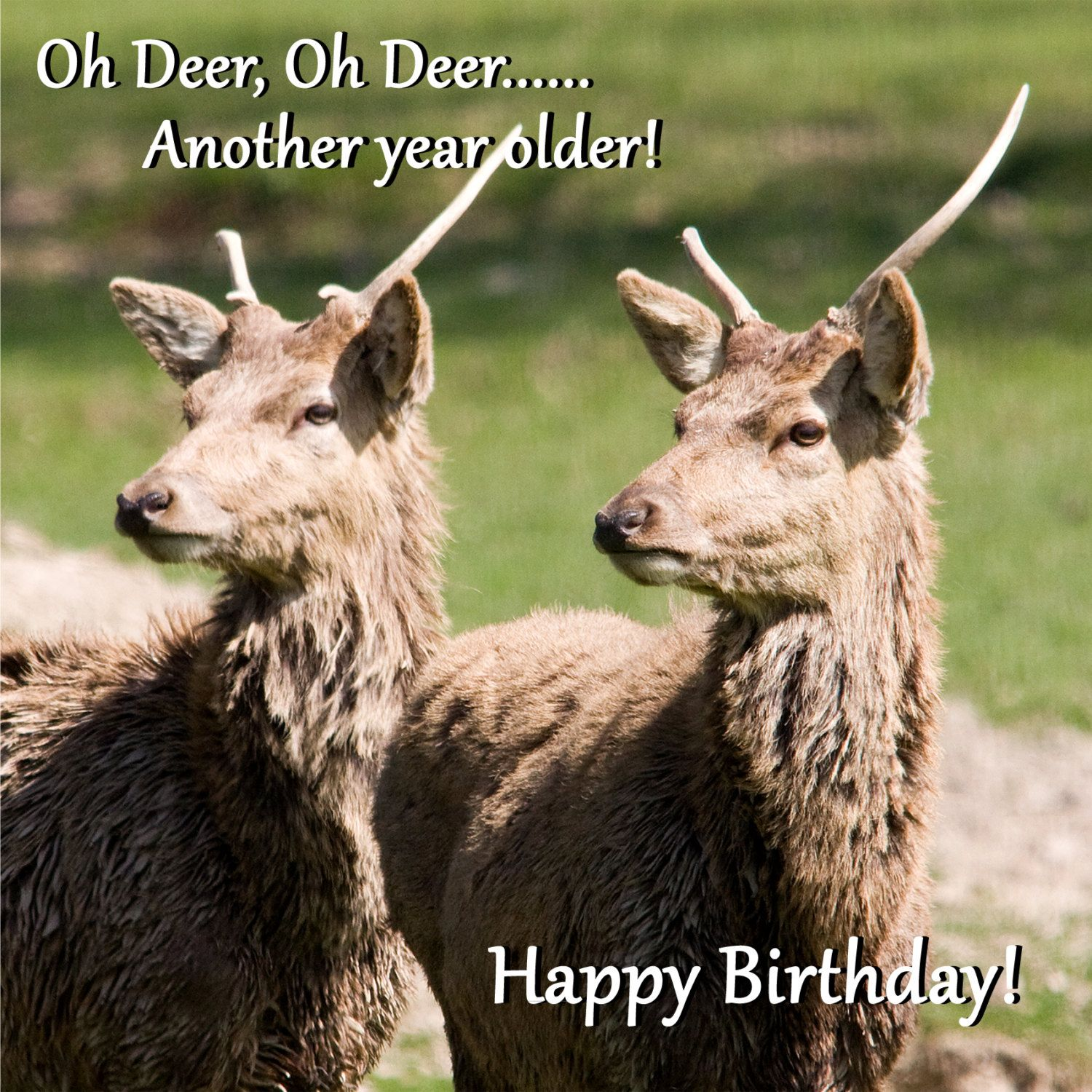 Birthday Card Oh Deer Another Year Older Funny Deer Photo Blank Greeting Card From Original Photograph By Funny Deer Deer Photos Happy Birthday Greeting Card