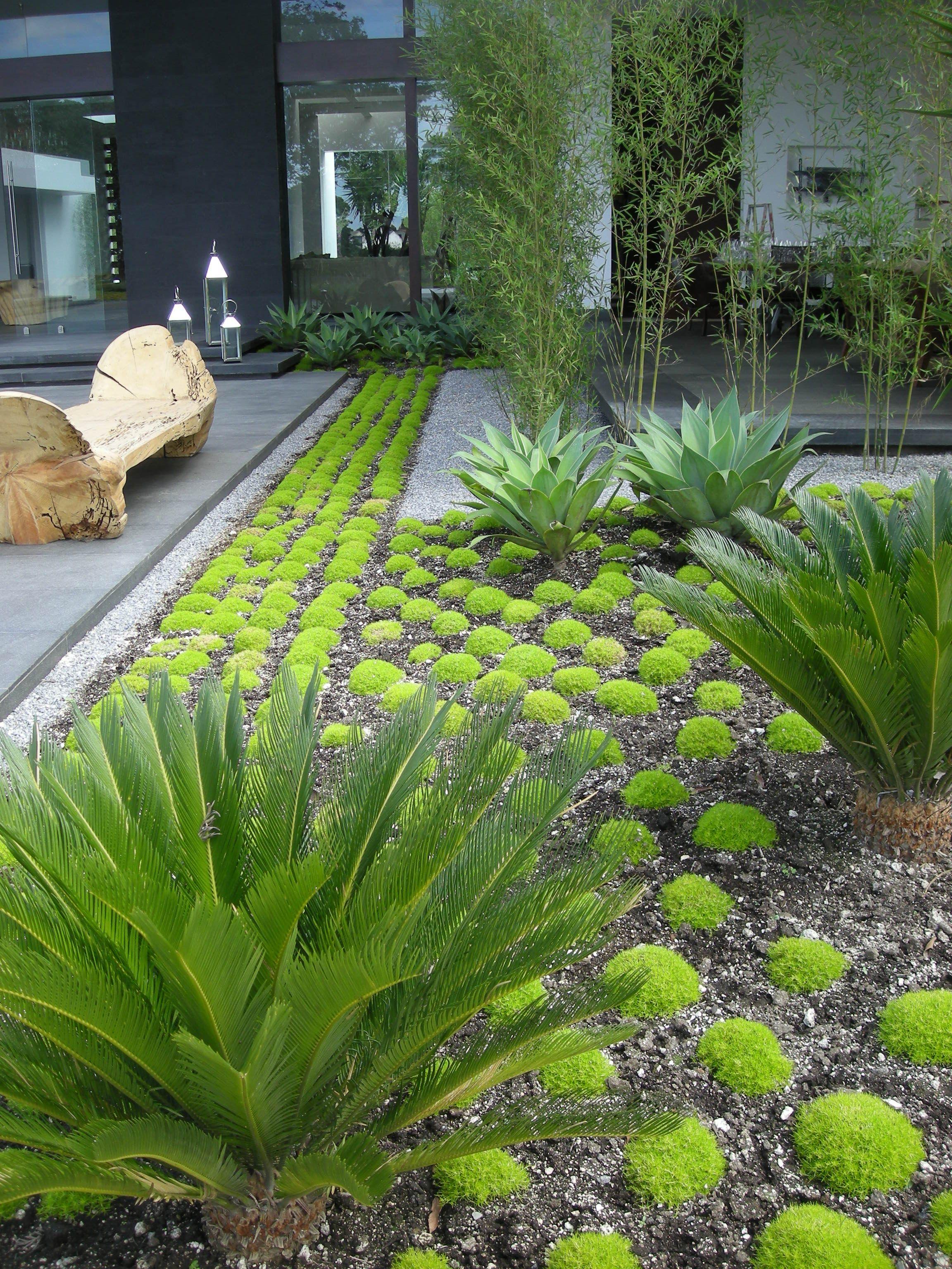 Private Garden In Guatemala City Modern Landscaping Modern
