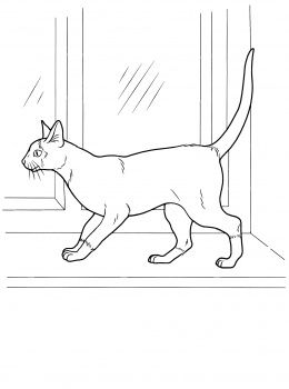 Cat Color Pages Printable Siamese Cat Coloring Page Super