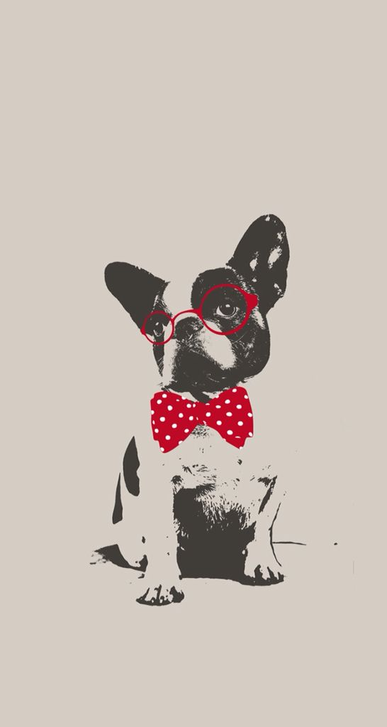 Love This Little French Bulldog Wallpaper My Frenchie