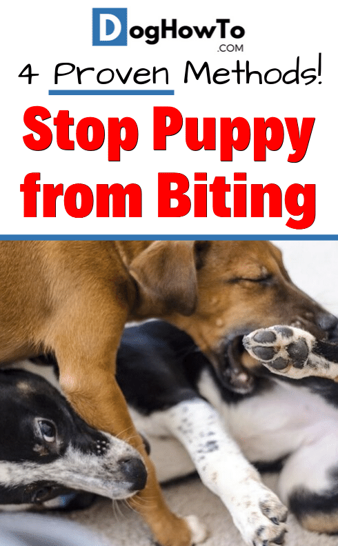 How To Stop Your Puppy From Biting Puppy Biting Stop Puppy From Biting Puppy Training Biting
