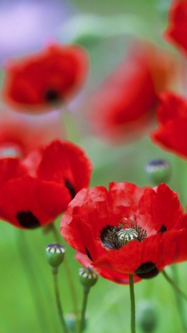 Pin by chiara lo cicero on flowers pinterest flowers flowers mightylinksfo Images