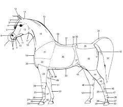 https://www.google.com/search?q=arabian horse pics