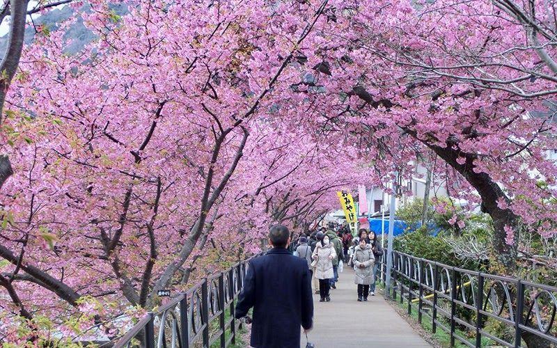 Pemandangan Jepang Kota Itinerary Tokyo Osaka Hari 0 Daftar Lengkap Itinerary Tokyo Osaka 8 Hari Ketika Masyarakat Je Bunga Sakura Pemandangan Taman Jepang