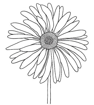 Gerbera With Images Flower Drawing Colorful Drawings