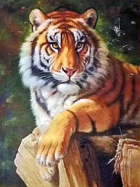 Мудрый тигр, картина раскраска по номерам по холсту ...