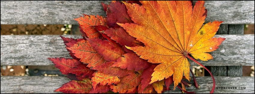 21 Moments That Will Get You Excited For Fall | Cover photos and ...