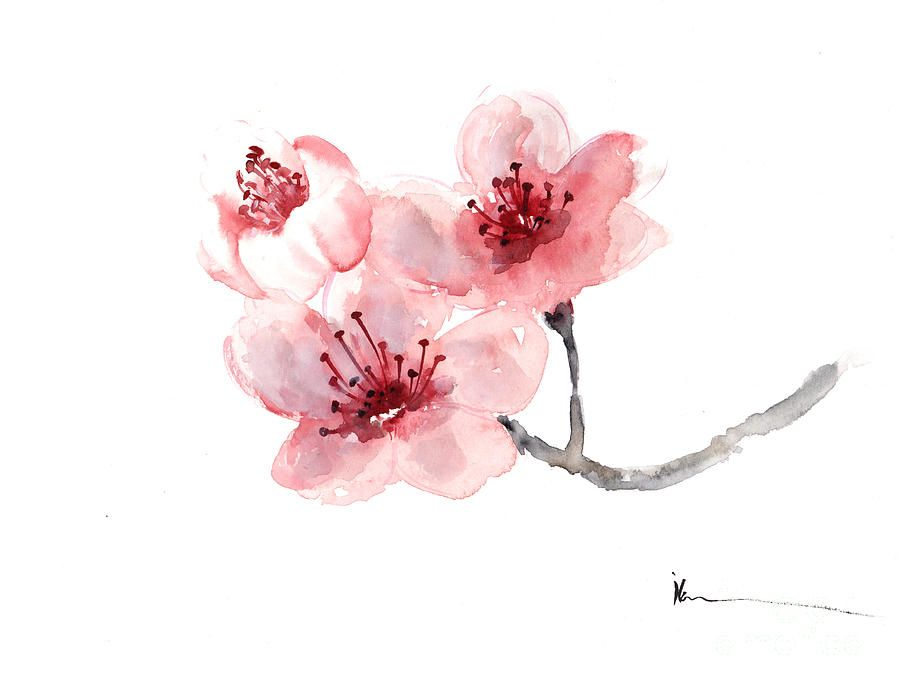 Watercolor cherry blossom flower google search why not watercolor cherry blossom flower google search mightylinksfo