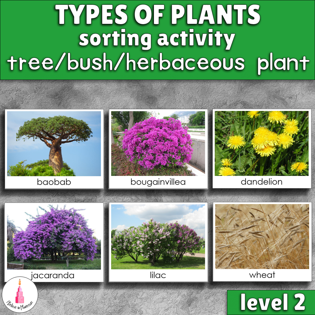 hight resolution of Types of plants sorting cards (tree