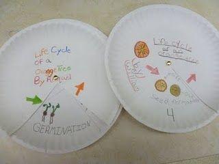 life cycle idea