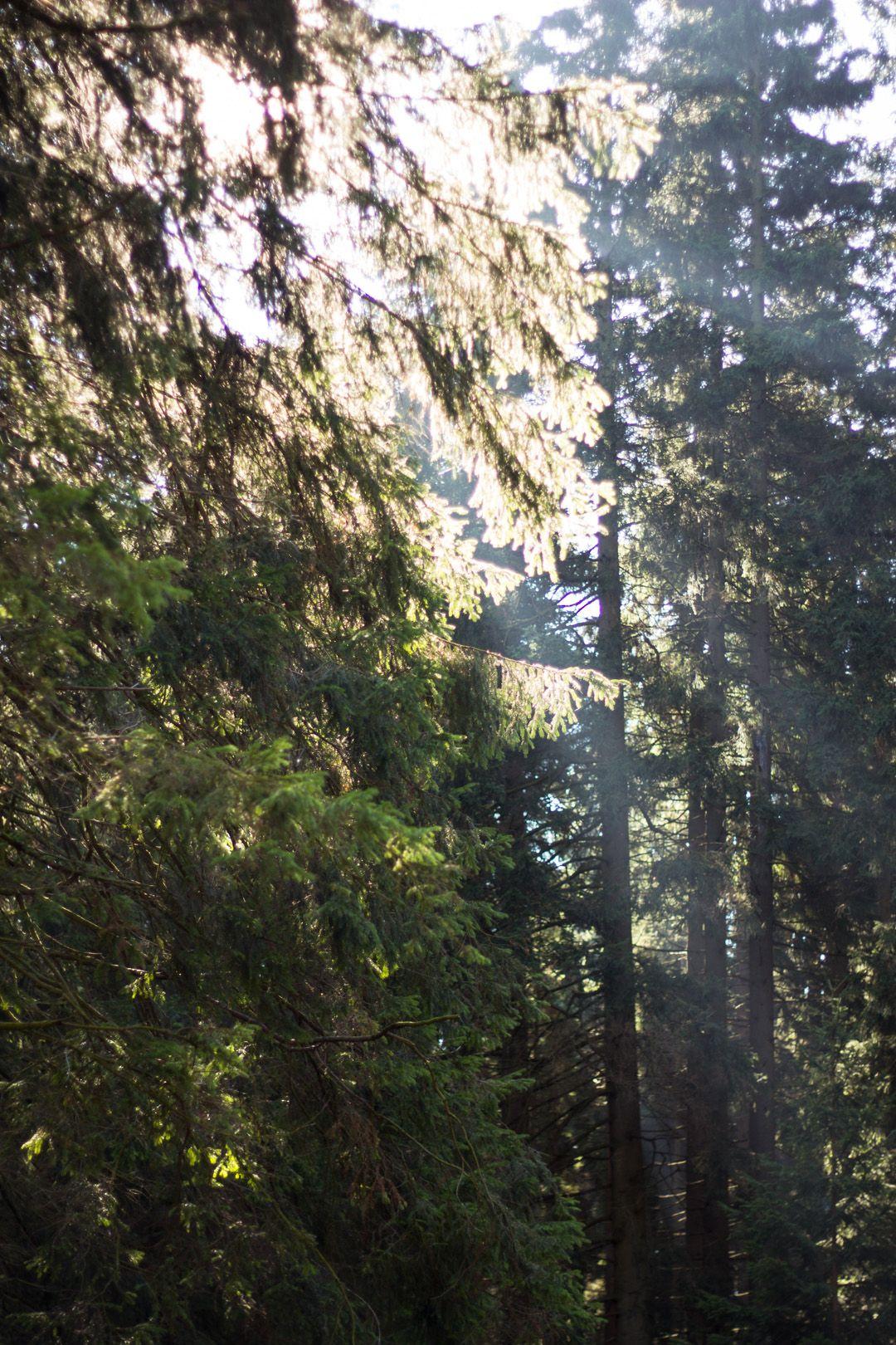 Zentral in Deutschland gelegen, ist der Brocken ein beliebtes Ausflugsziel, um am Wochenende ein bisschen in die Natur zu entfliehen.  #deutschland