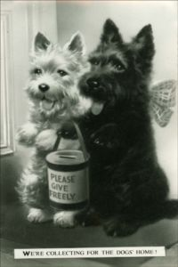 How Adorable This Picture Is A Westie And A Black Cairn