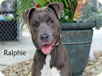 Pin By Thatonewolflover On Need A Home Shelter Dogs Pets