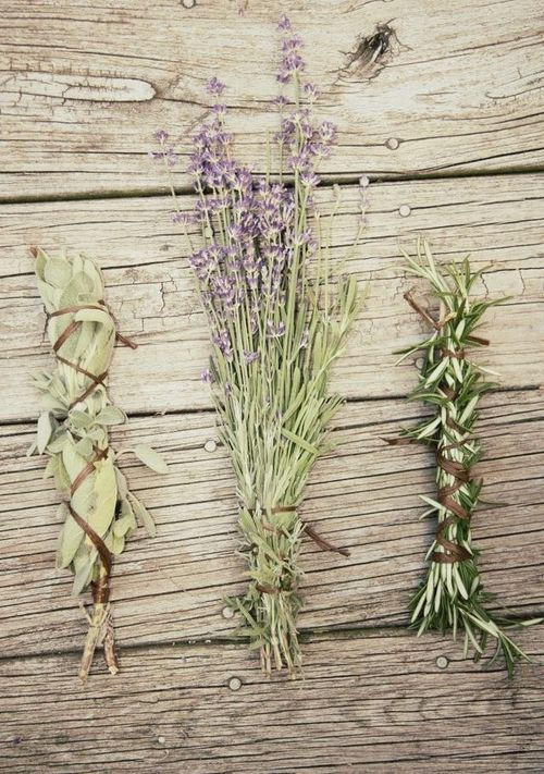 rosemary research paper With hair rosemary research paper loss and thinning affecting over half of people aged over 50 latest posts rosemary research paper 22032018 как защитить от угона lada vesta.