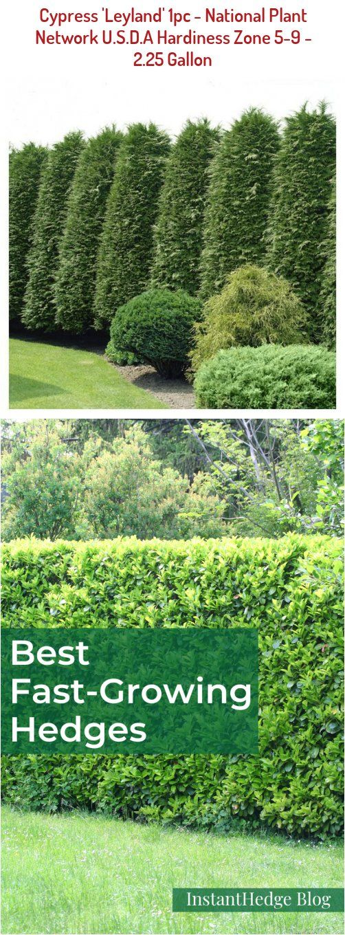 Pin By Ligia Juanena On Hedges In 2020 Fast Growing Hedge Plants Traditional Landscape