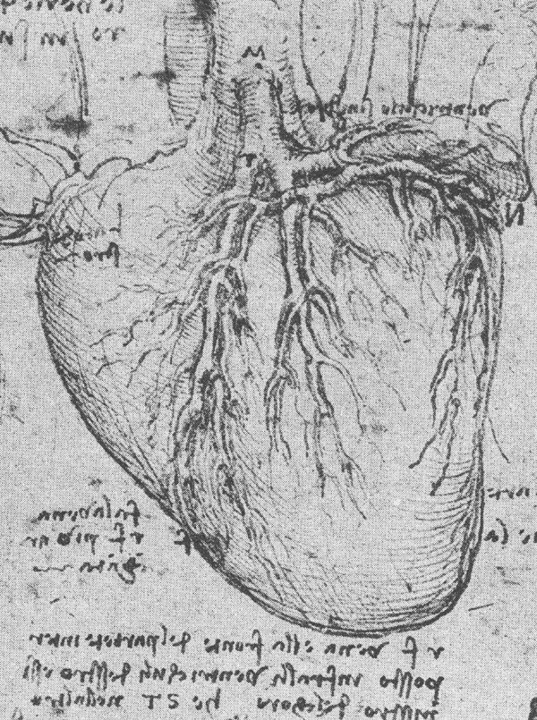 da Vinci and the Heart: Anatomical Exploration Through the Eyes of ...