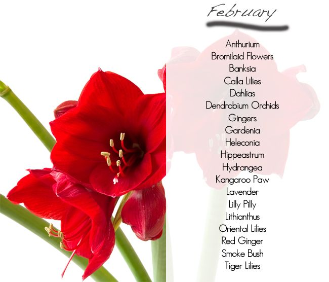 What Flowers Are Available In Season February