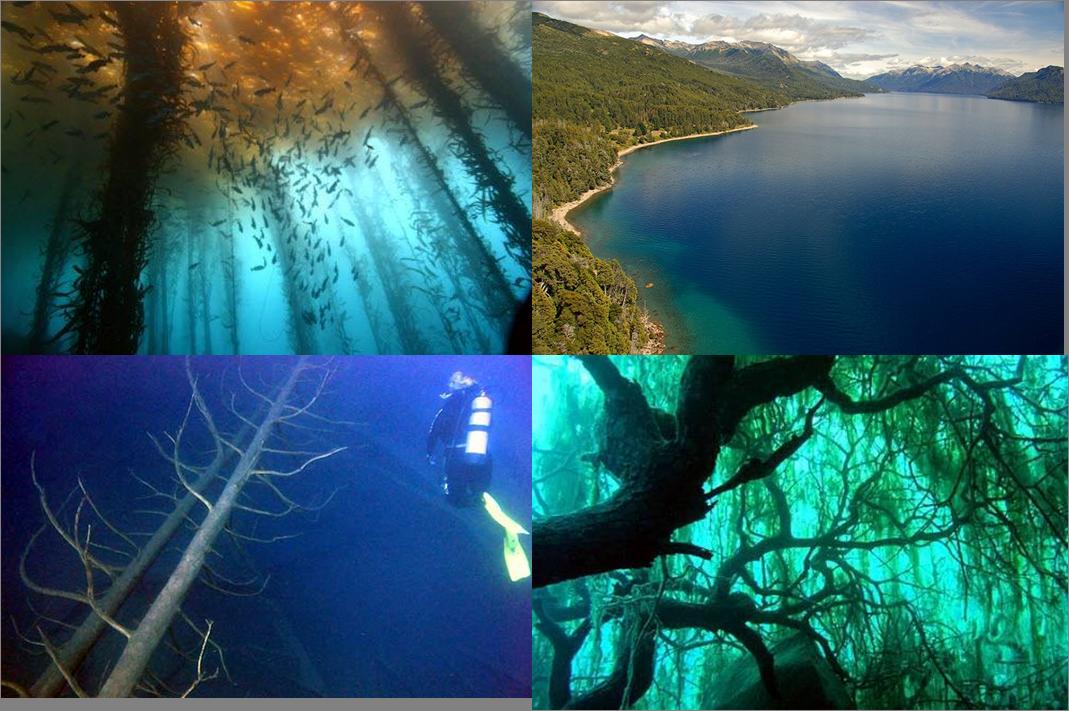 El Bosque Sumergido en el Lago Traful, en Neuquén, la Patagonia en Argentina. Durante un terremoto ocurrido mucho tiempo atrás , se produjo el desmoronamiento de una ladera boscosa que terminó sumergido en el fondo del lago. Está en El Parque Nacional Nahuel Huapi.