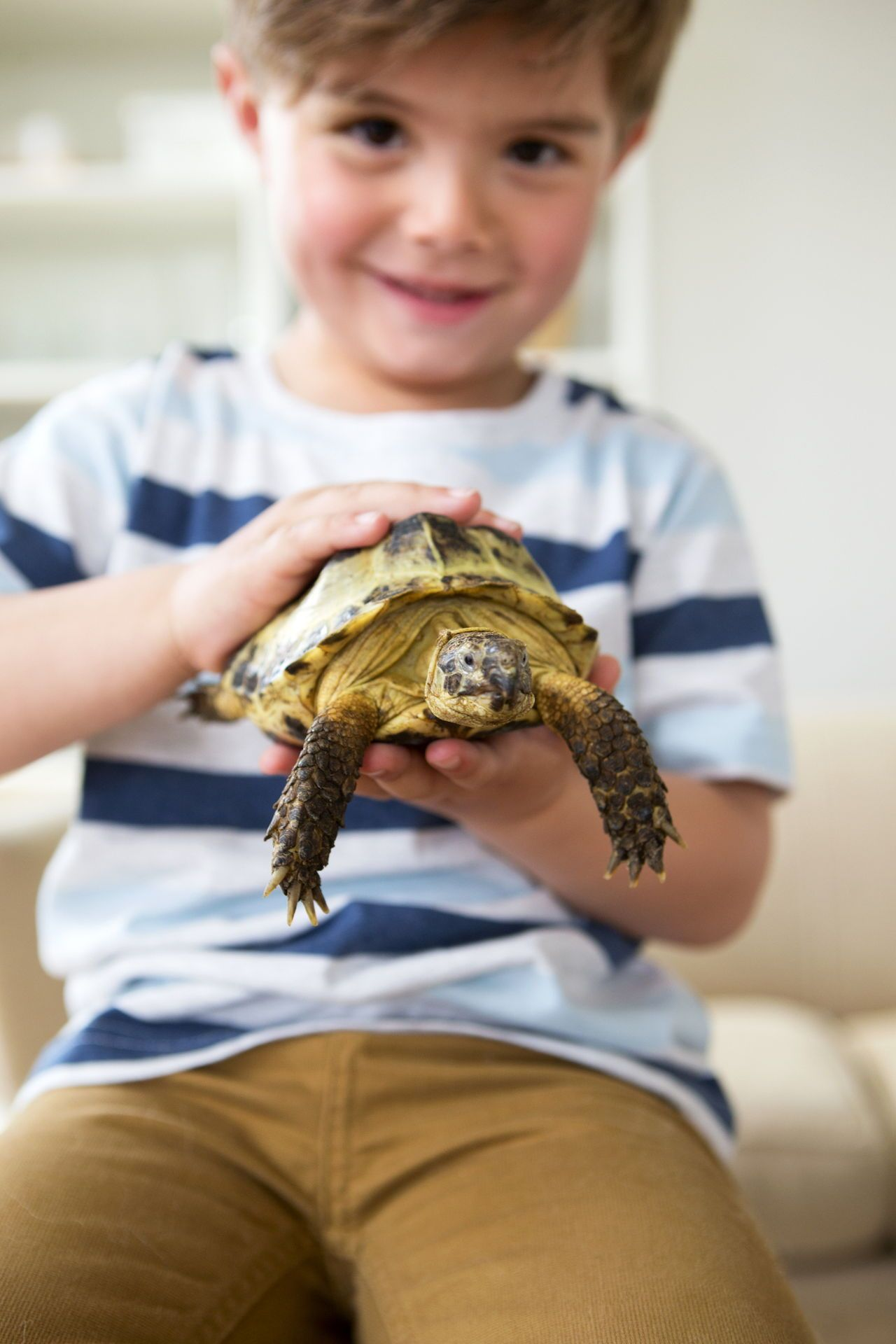 Pet Turtles That Stay Small and Look Cute Forever