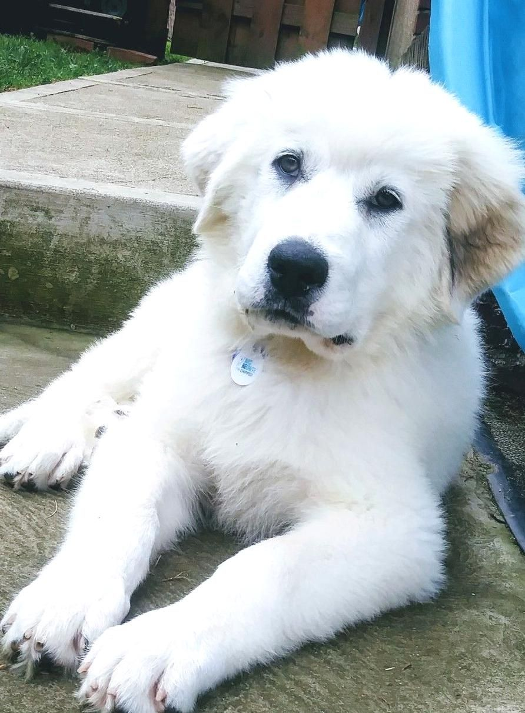 Puppies for adoption pittsburgh pennsylvania