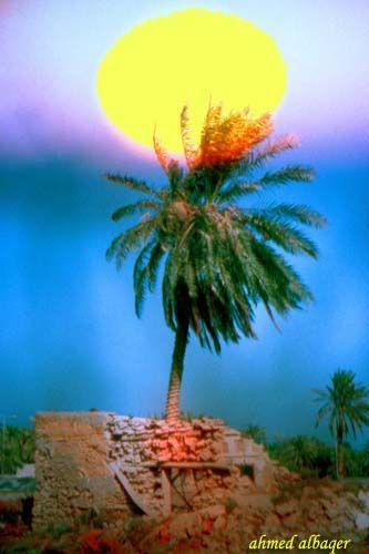 Bahrain S Environment بيئة بحرينية Bahrain Kingdom Of Bahrain Plant Art
