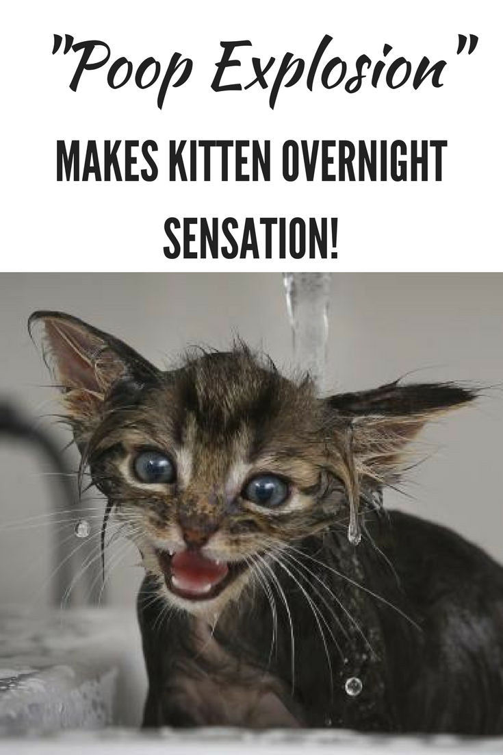 Pin On Cutest Kittens