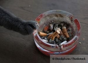 Studies show that animals can develop lung damage and certain kinds of cancers from exposure to cigarette smoke. http://healthypets.mercola.com/sites/healthypets/archive/2013/09/27/cigarette-smoking-lymphoma-risk.aspx